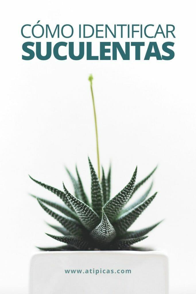 Cómo identificar suculentas y cactus