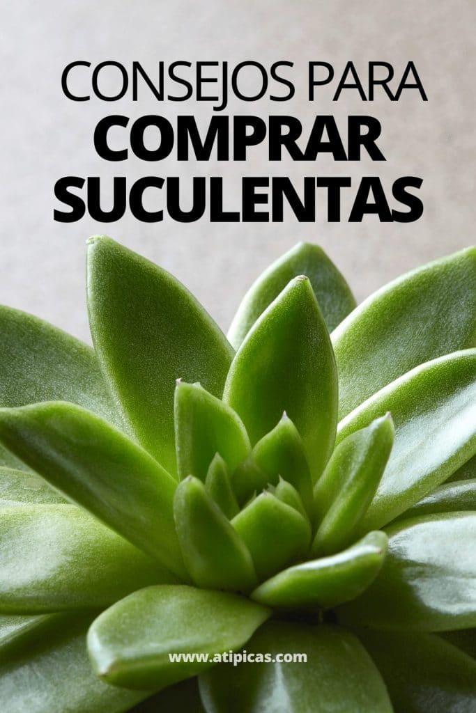 Consejos para comprar suculentas y cactus