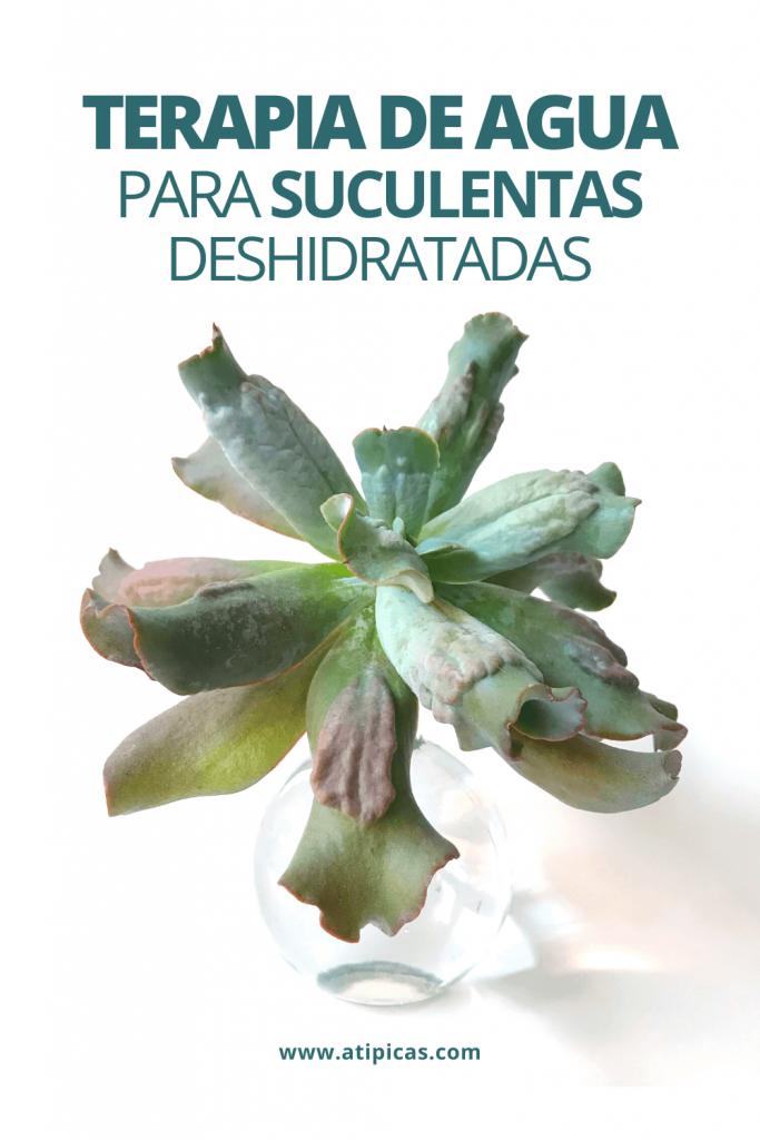 Terapia de agua para suculentas deshidratadas