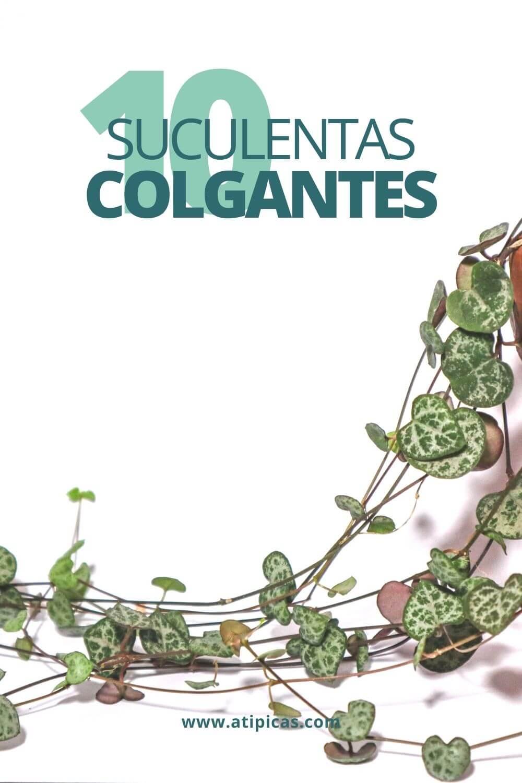 10 especies de suculentas colgantes